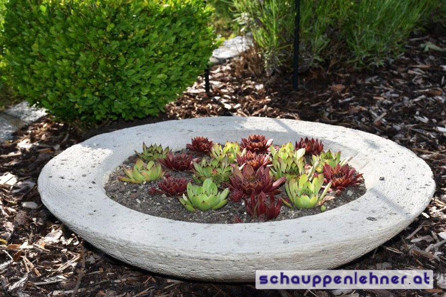 Bepflanzte Steinschale für den Garten